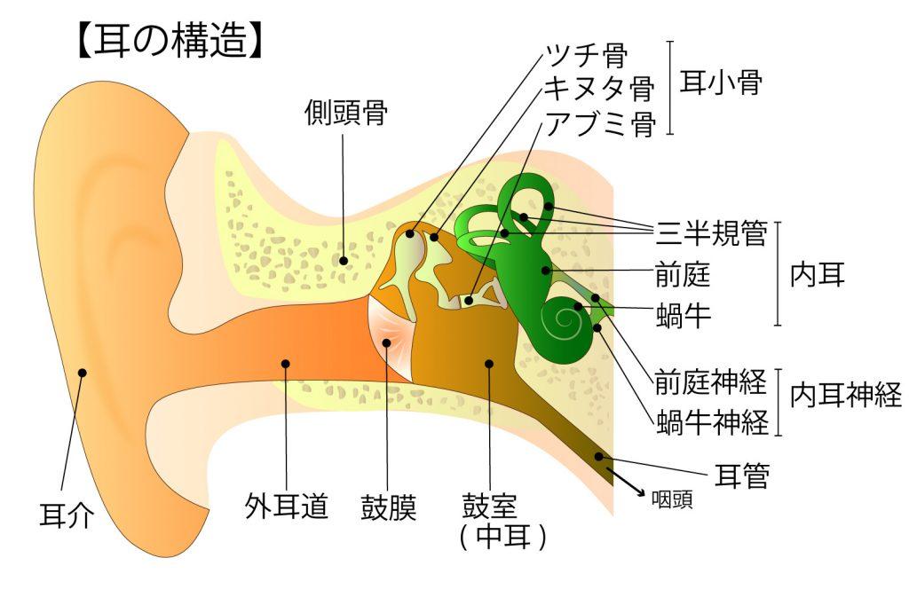耳の図解イラスト